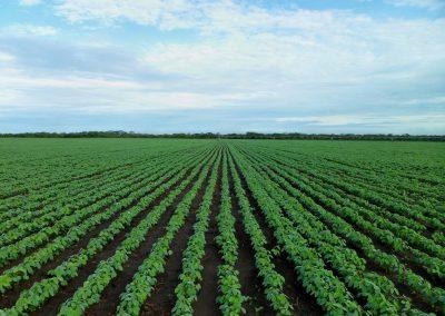 field-farm-flower-green-farming-crop-538397-pxhere.com
