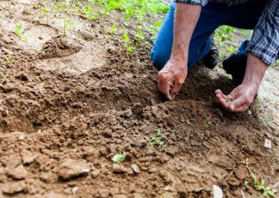 man-planting-plant-169523 (2)